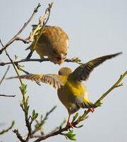 Aves comunicandose