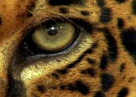 Ojo de jaguar