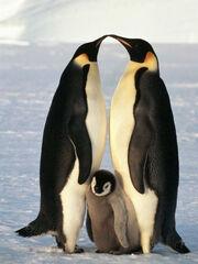 Wmf pinguinos emperador640