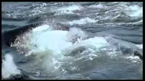 Orcas Asesinas persiguen matan y Devoran una Ballena IMPACTANTE¡¡¡¡¡¡¡¡