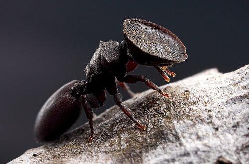 Hormiga Tortuga | Wiki Reino Animalia | Fandom