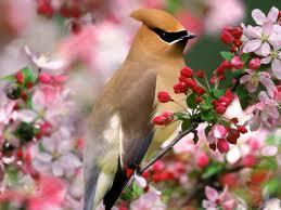 Ave de primavera