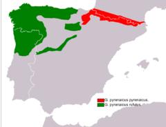 240px-Galemys pyrenaicus map