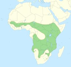 Distribucion leon africano