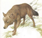 Lobo de edward