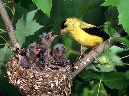 Mama ave y sus crías