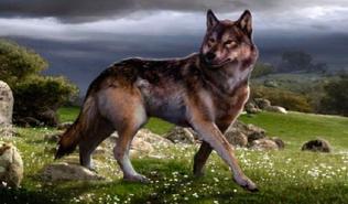 Lobo gigante 4