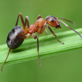 Cuadroportada invertebrados