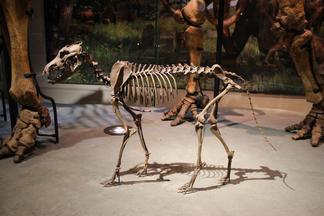 Lobo gigante 5