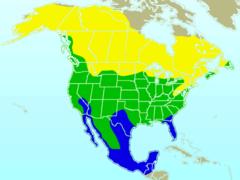 American Robin-rangemap