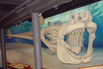 Megalodon 3