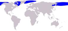 230px-Cetacea range map Bowhead Whale