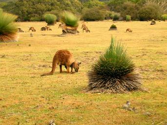 Australasia 2
