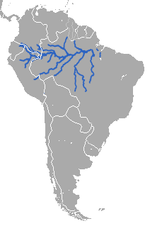 Amazonian Manatee area