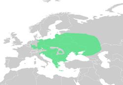 250px-Pseudepidalea viridis dis