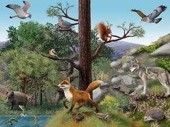 Ecosistema -terrestre