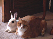 220px-Cat and rabbit sitting together