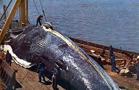 Caceria ballena azul
