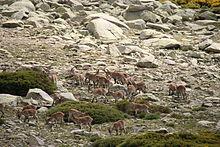 Sierra de Gredos 26-06-2010 16-34-20 3888x2592