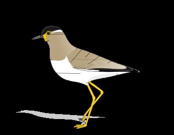 Un ave