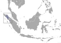 250px-Sumatran Orangutan area