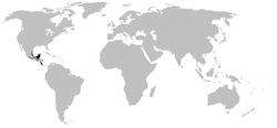 250px-Rhinophrynidae dirstrib