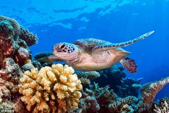 Arrecifes de coral2