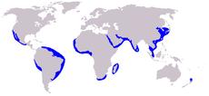 230px-Cetacea range map Long-beaked Common Dolphin