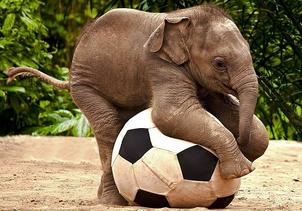 Elefante asiatico 6