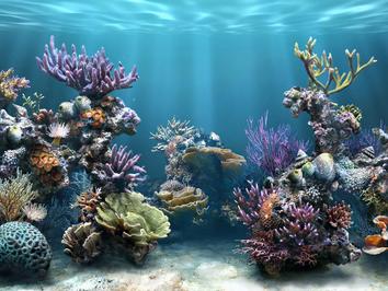 Arrecifes de coral3