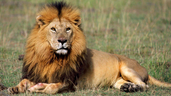 Leon Wiki Reino Animalia Fandom Powered By Wikia
