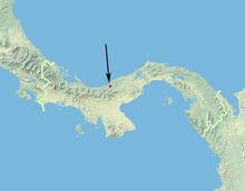 Andinobates geminisae
