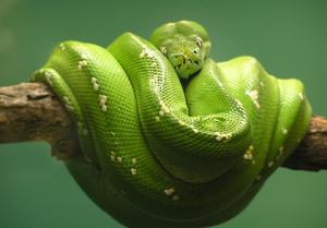 Serpientes 3