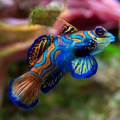 Cuadroportada peces