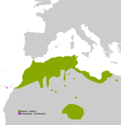 240px-Pelophylax saharicus range Map