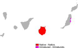 Gallotia stehlini range Map