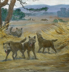 Lobo gigante 3