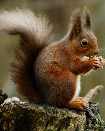 Animales - Naturaleza - Página 3 450?cb=20140608052630&path-prefix=es