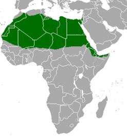 250px-Gazella dorcas map