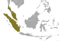 250px-Sunda Loris area
