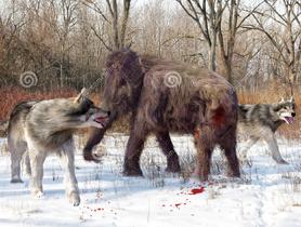 Lobo gigante 7