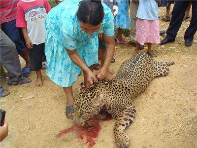 Jaguar asesinado