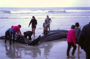 Orca falsa 10