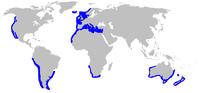 200px-Galeorhinus galeus distmap