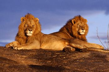 Dos machos