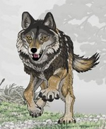 Lobo de ambruster