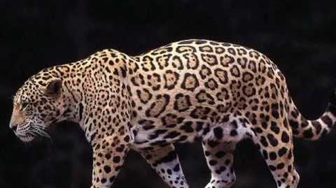 Todas las especies de felinos del mundo