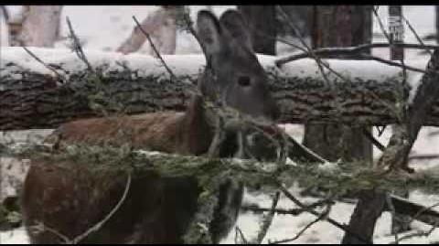 Musk-Deer 2 (Animal.Planet.Wild.Russia.3of6)