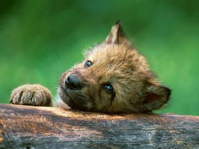 Cachorrito