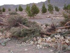 Cemetery of yazd